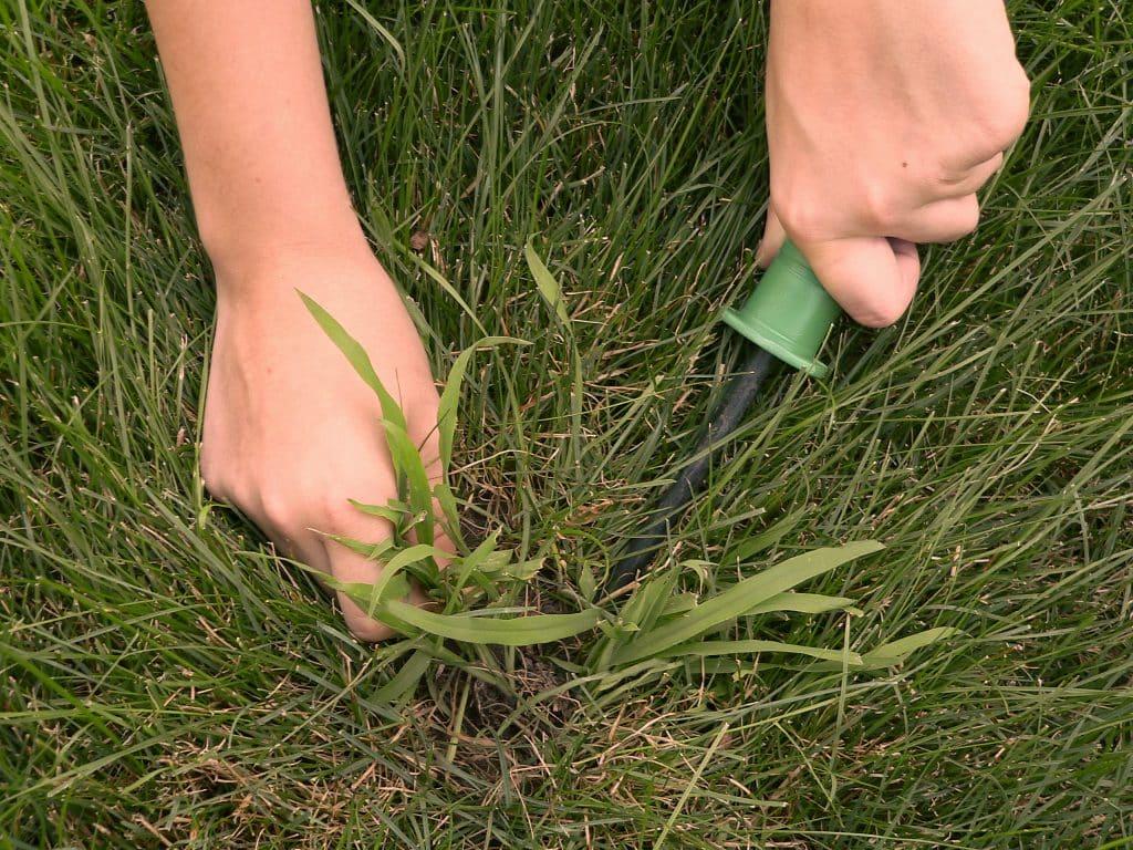 crabgrass removal