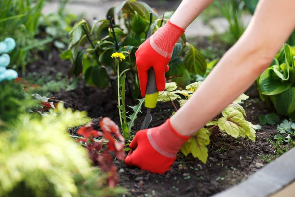 weeding tips