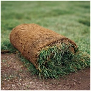 Minneola Sod Delivery and Installation