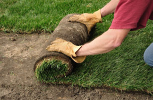 Types of Sod to Choose From