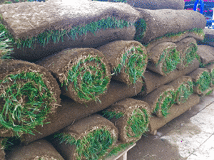 different types of sod