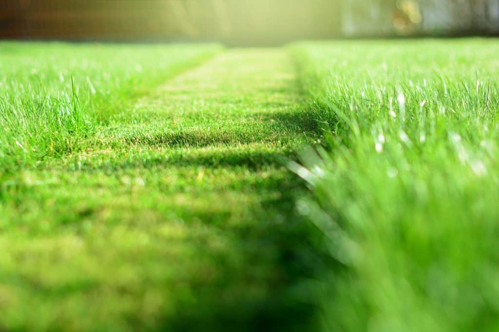 Everything You Need To Know About Sod